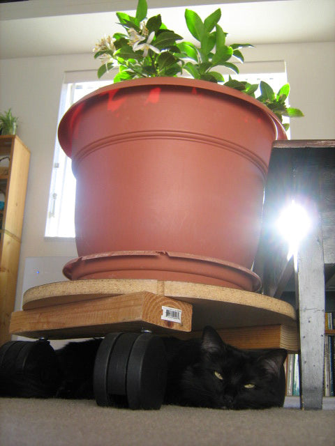 Photo shows home-made planter on large casters from Miracle Caster. Photo demonstrates use of broad-brimmed top-hat sockets. Cat is resting under elevated planter.