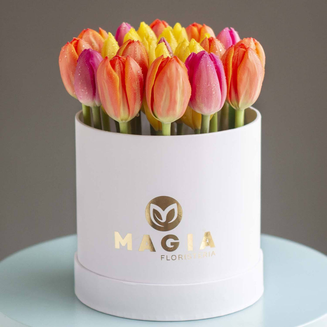 Mini box con 25 tulipanes