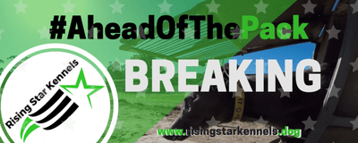 BREAKER NEWS: Shayne Stiff's pup gets going!
