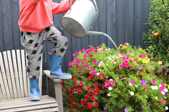 Powder Blue Gumboot Garden