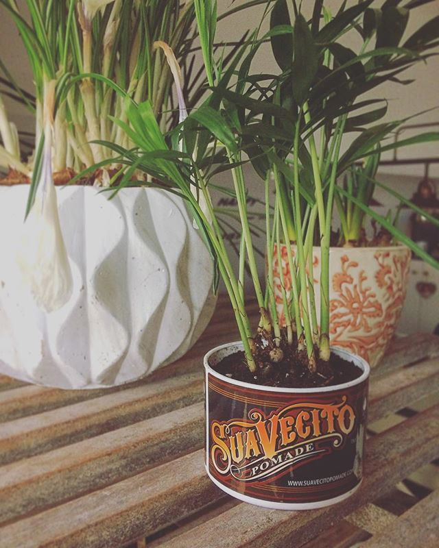 Suavecito OG Poamde planter with plants in it
