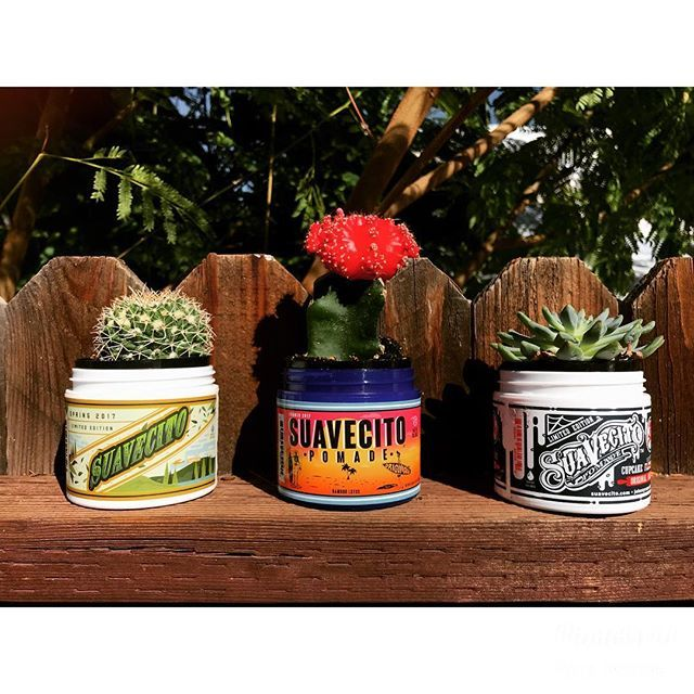 pomade containers used for succulent plants