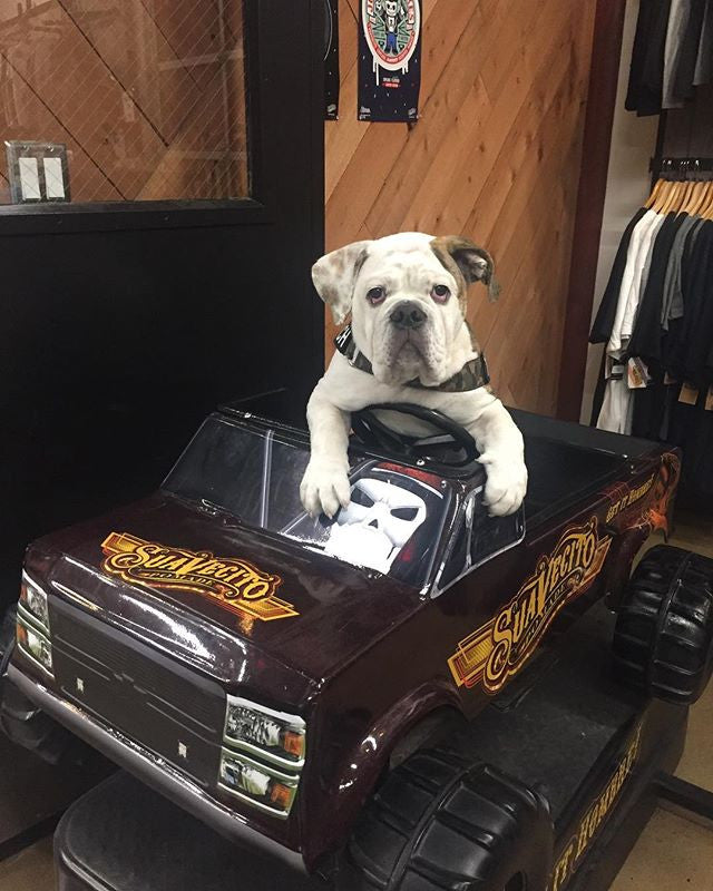 tenochthebulldog sitting in suavecito store car machine