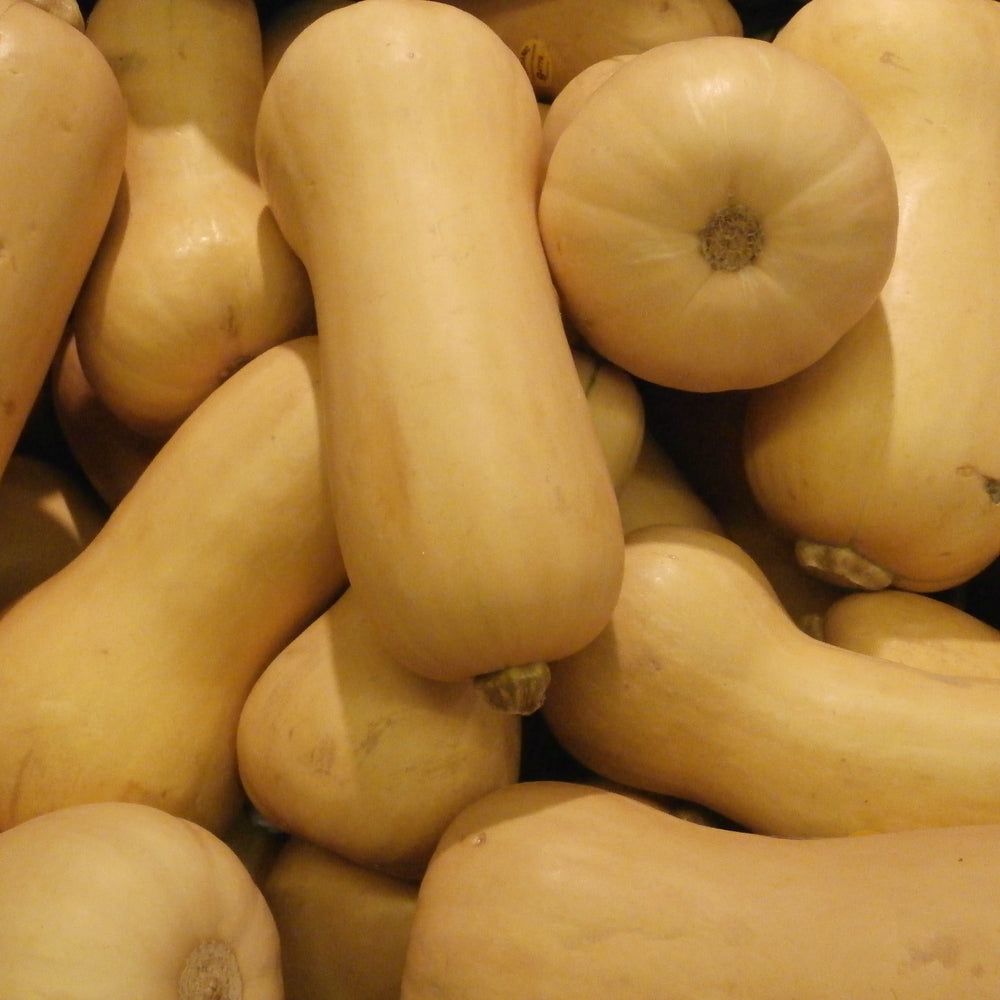 Butternut Squash - KBF Farms - Farm Market & Nursery - K.B.F. Enterprises Inc.