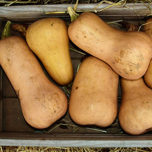 Butternut Squash - KBF Farms