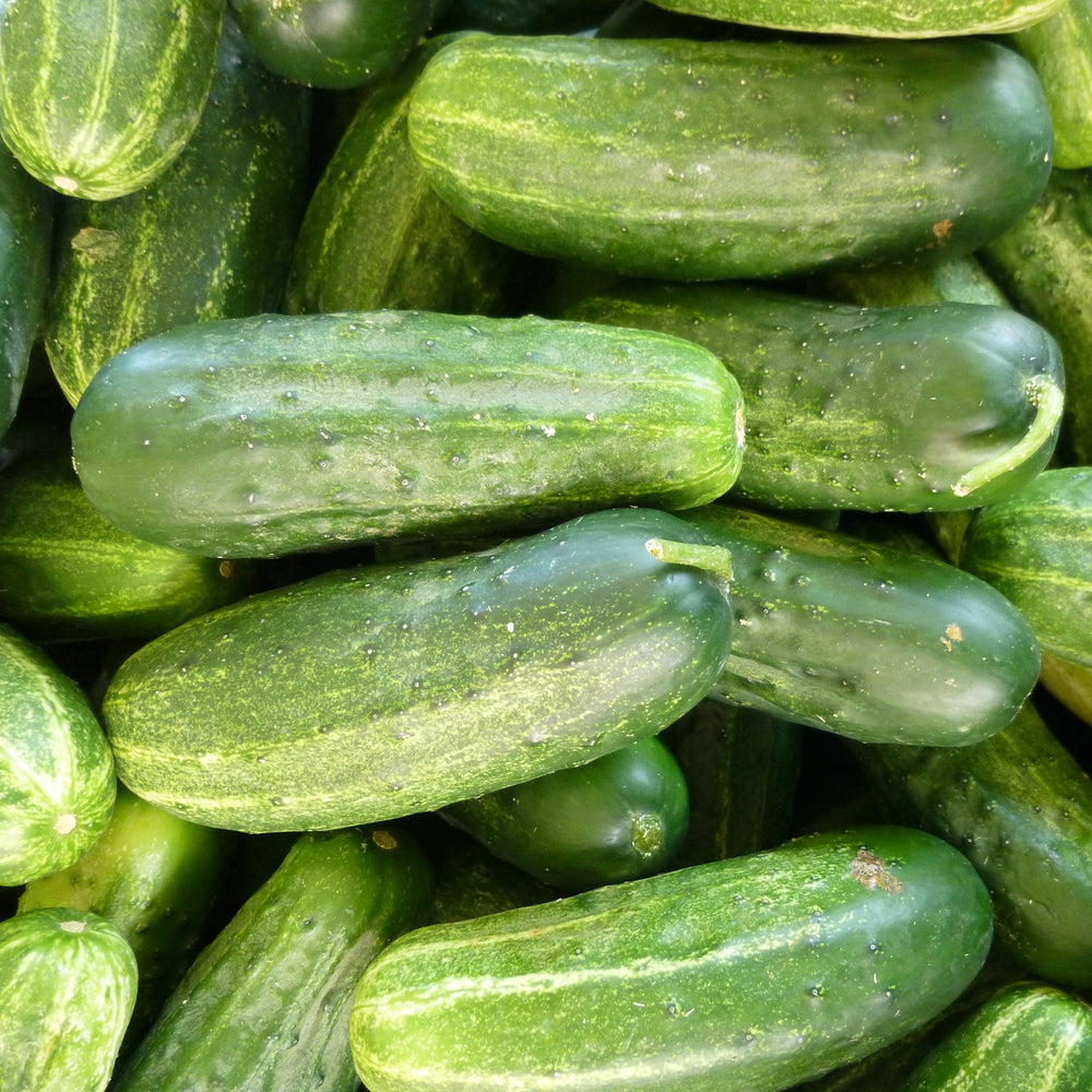 Cucumbers - KBF Farms