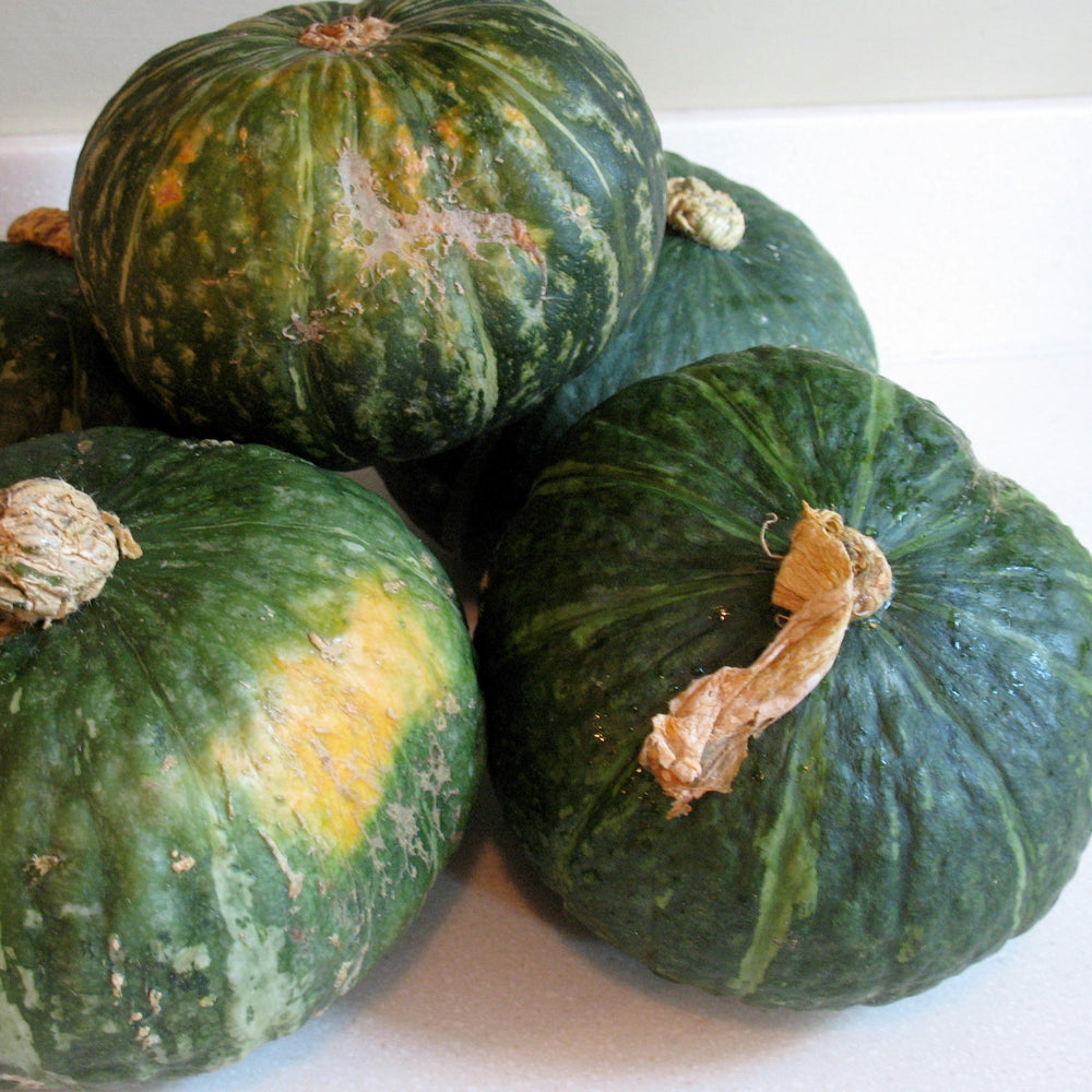 Kabocha Squash - KBF Farms