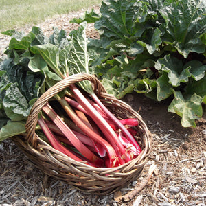 Load image into Gallery viewer, Rhubarb - KBF Farms