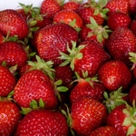 Strawberries - KBF Farms - Farm Market & Nursery - K.B.F. Enterprises Inc.