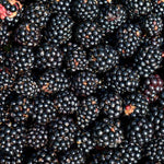 Blackberries - KBF Farms - Farm Market & Nursery - K.B.F. Enterprises Inc.