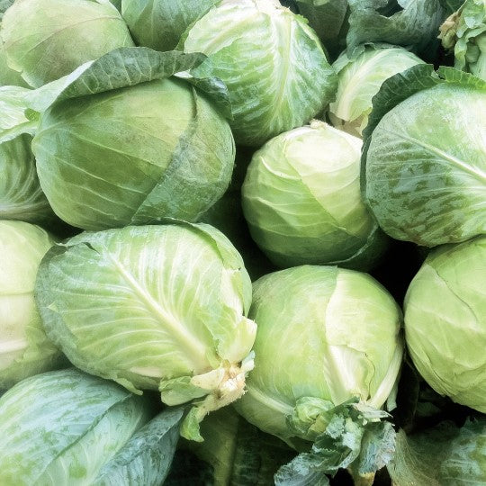 Cabbage - KBF Farms