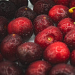 Okanagan Cherries - KBF Farms - Farm Market & Nursery - K.B.F. Enterprises Inc.