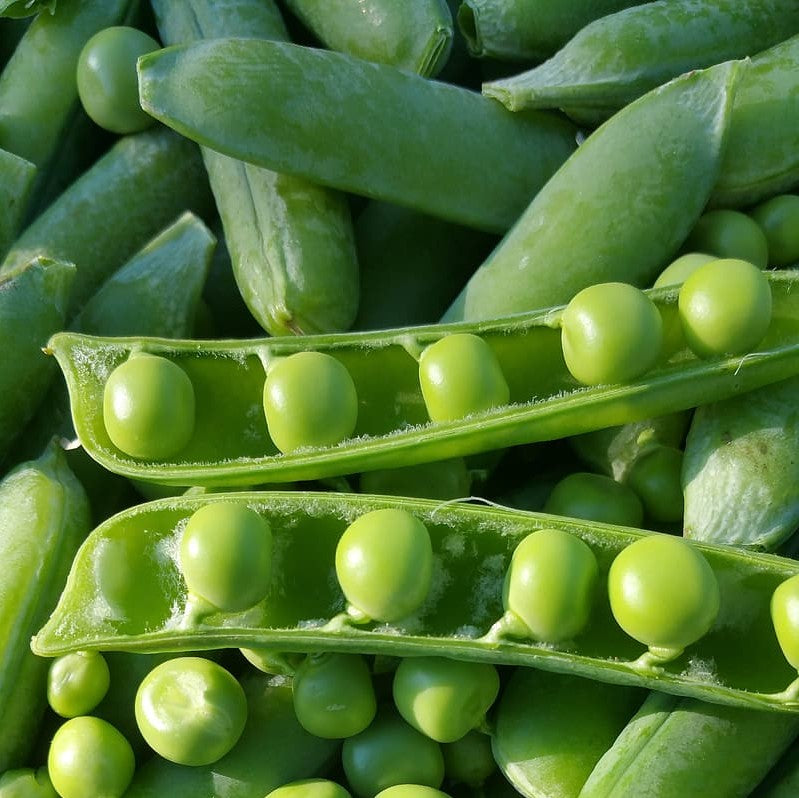 Green Peas - KBF Farms