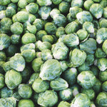 Brussel Sprouts - KBF Farms