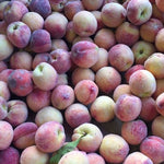 Peaches - KBF Farms - Farm Market & Nursery - K.B.F. Enterprises Inc.