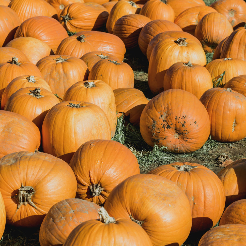 Pumpkins - KBF Farms - Farm Market & Nursery - K.B.F. Enterprises Inc.