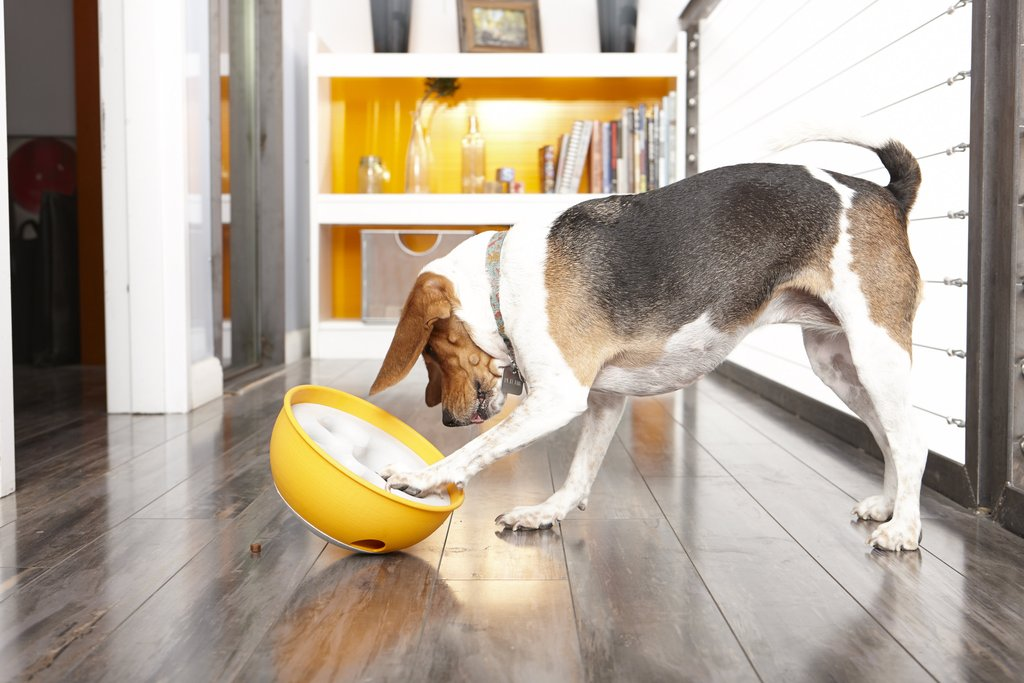 Dog playing with bowl - Zero Waste – Say What? How the Rock N' Bowl is Saving the World - PAW5