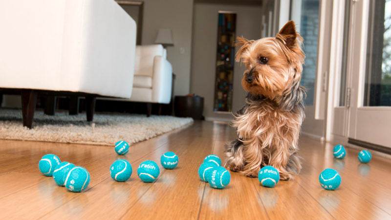 Dog playing with balls - Introducing the Third Category of Enrichment: Toys and Puzzles - PAW5