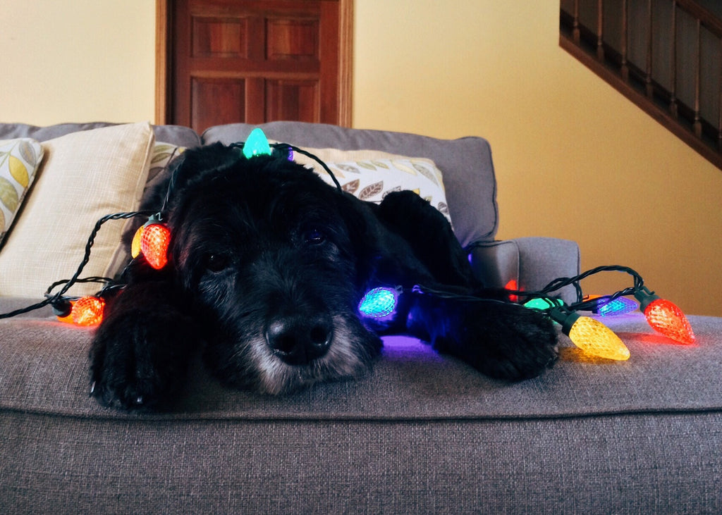 Dog wrapped in holiday lights - Staying Calm During the Holidays – Use Your Nose - PAW5