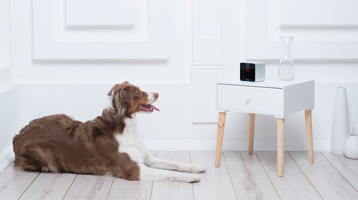 Dog resting - The Tech Products That Will Make Your Dog's Day - PAW5