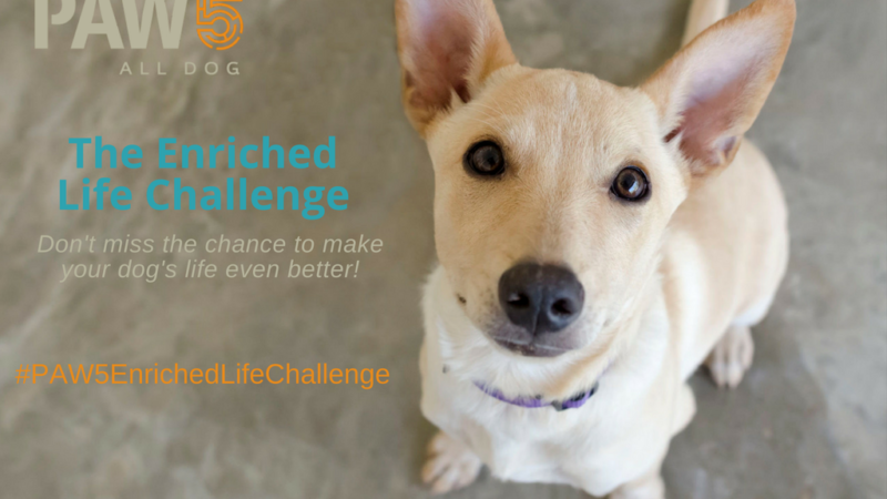 Here's an Enrichment Challenge That Will Make Your Dog's Life Awesome! - PAW5
