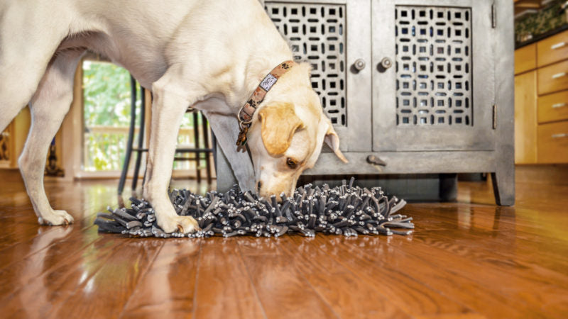 Dog nuzzle mat - Ditch the Dog Bowl - PAW5