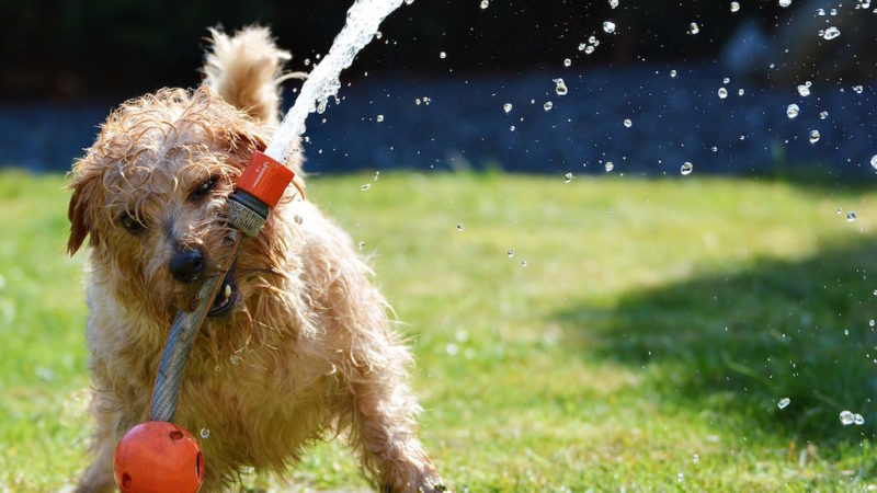 Dog playing with hose - Introducing the Fourth Category of Enrichment: Environmental - PAW5