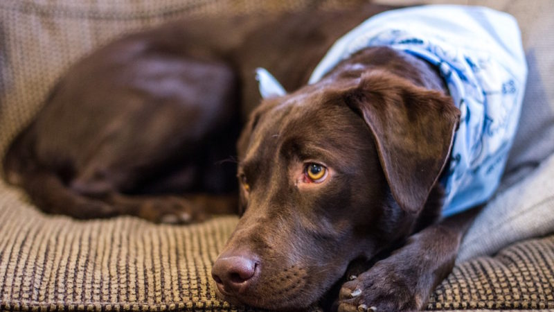 Dog resting - 3 Ways to Get Your Dog Moving (When You Don't Want To) - PAW5