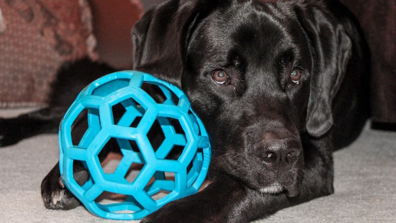 Dog with big ball - 4 Reasons Solo Play Is Important for Your Dog - PAW5