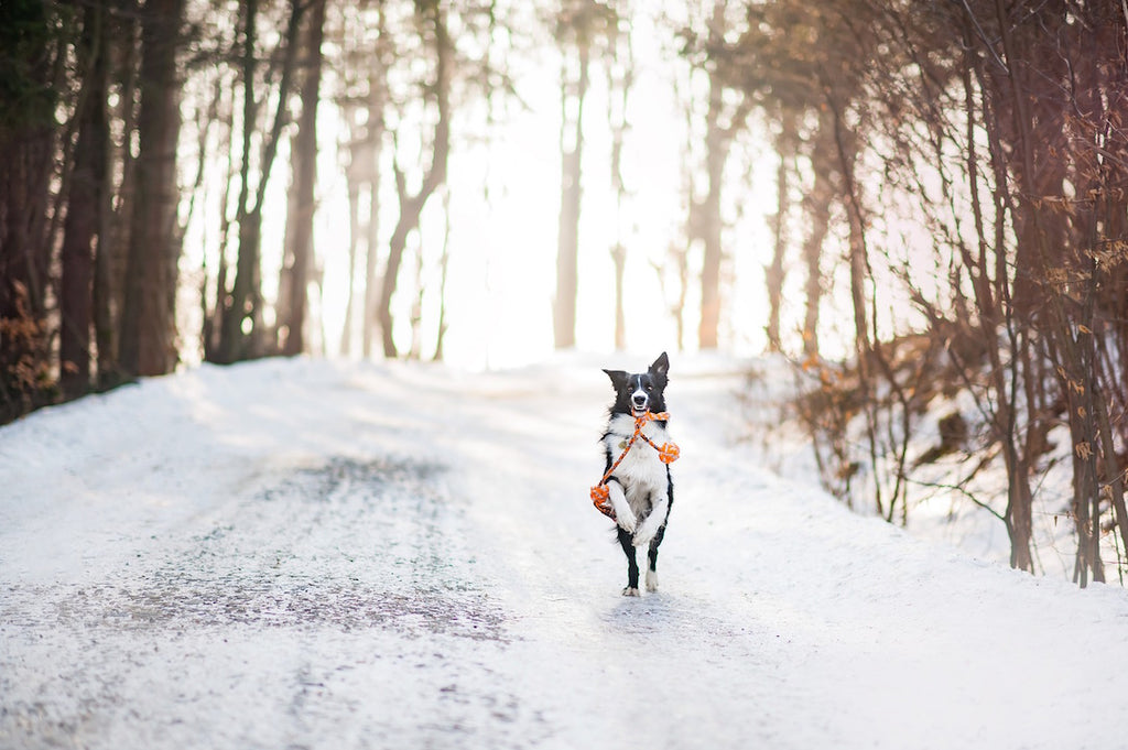 Dog running along snowy road - Indoor and Outdoor Winter Fun for Dogs - PAW5