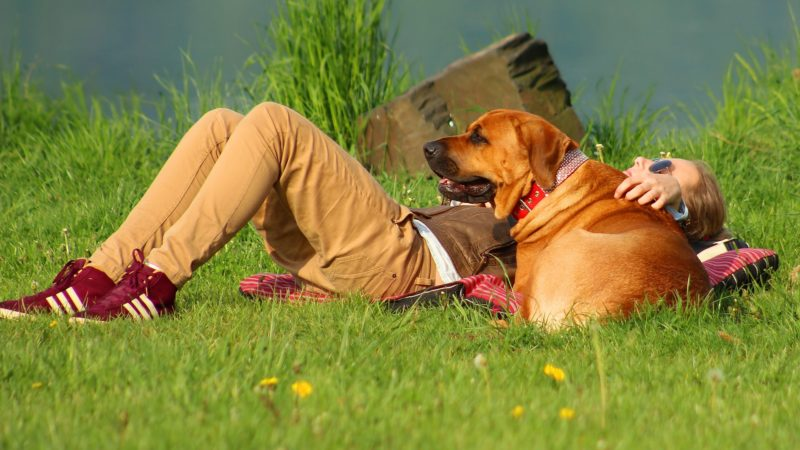 Man with dog on grass - More than a Product: How PAW5 Makes a Difference - PAW5