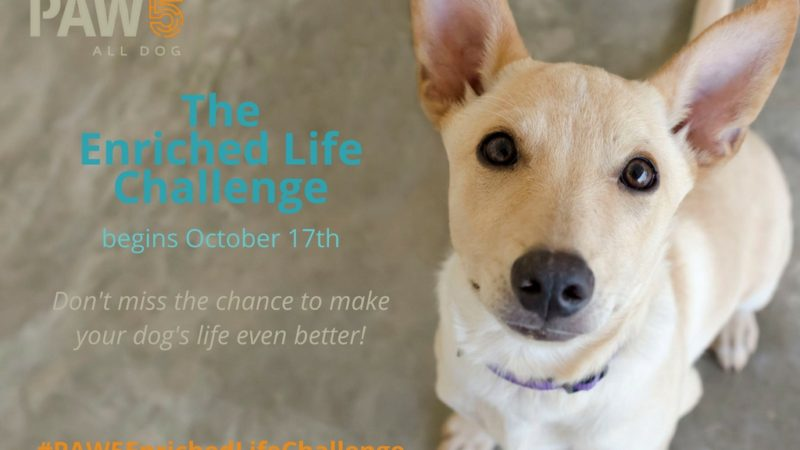 Dog closeup - Announcing the PAW5 Enriched Life Challenge for Your Dog! - PAW5