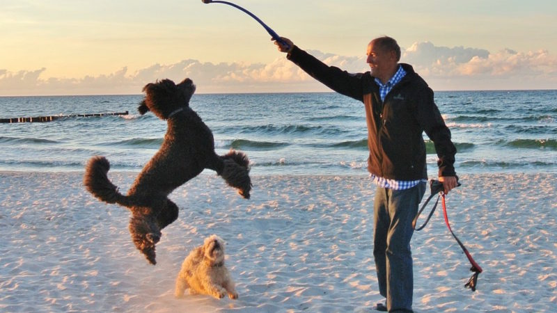 Dog jumping with toy - 4 Reasons You and Your Dog Should Get Your Game On! - PAW5
