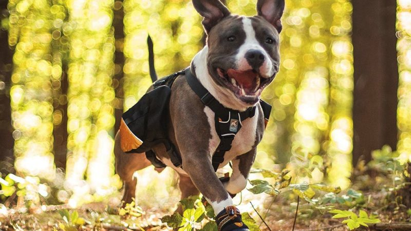 Dog running - 5 Jobs Your Dog Will Love To Do! - PAW5