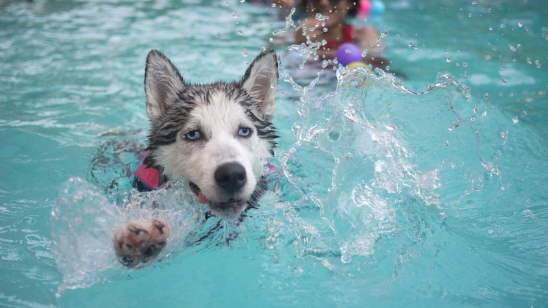 Dog swimming - Water Games for Swimming Pups - PAW5
