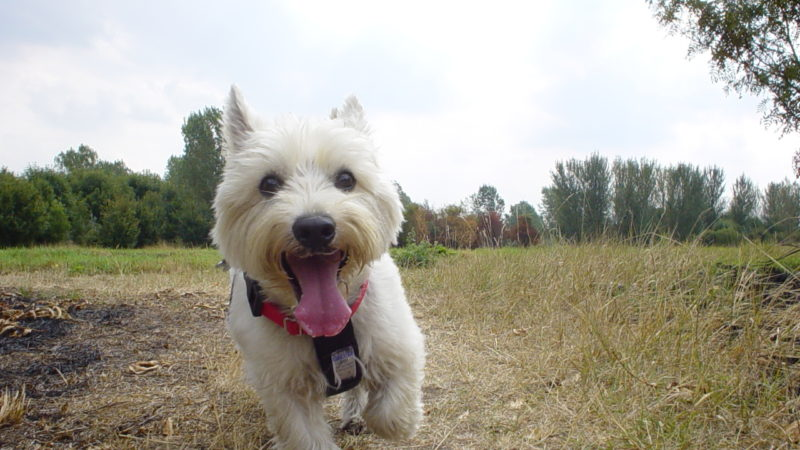 Dog running - Social Outings Perfect for You and Your Dog - PAW5