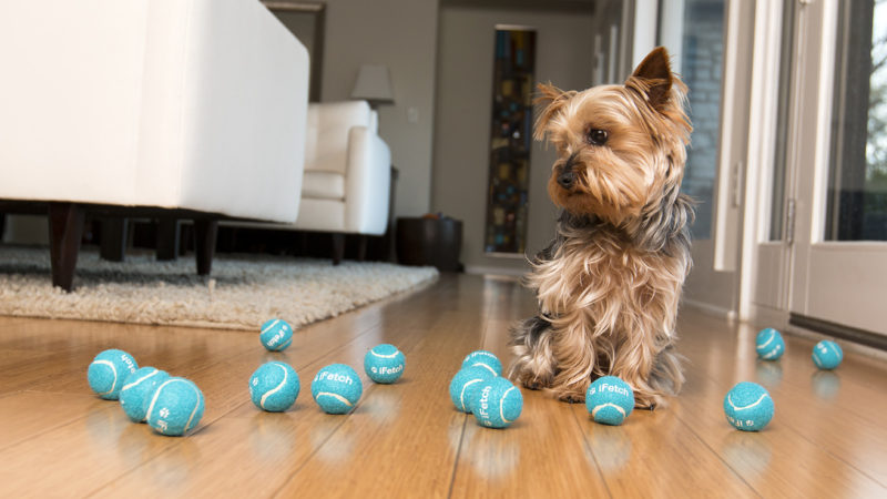 Dog with tennis balls - Top Tech Pet Toys for Pure Entertainment - PAW5