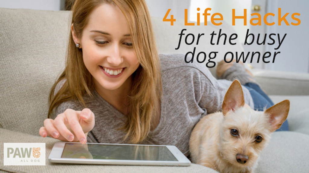 Woman with tablet and dog - Four Life Hacks for the Busy Dog Owner - PAW5