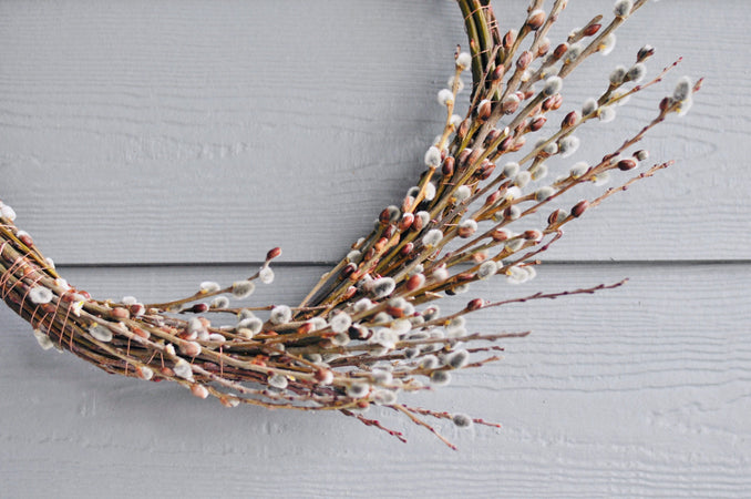 Pussy Willow Wreath with Clary Sage Studio