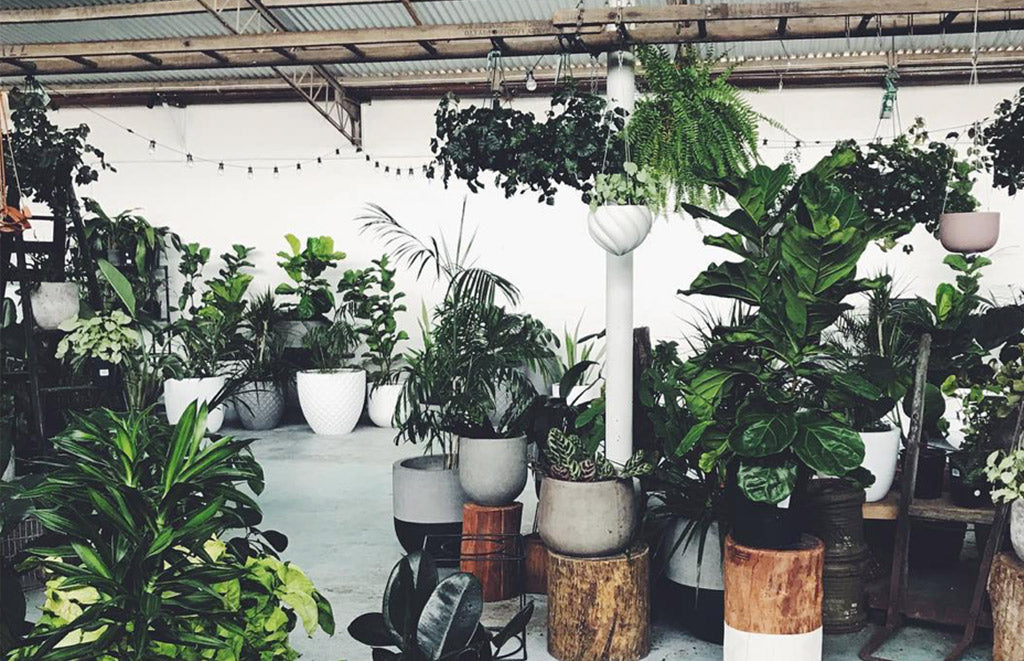 24 |  5 reasons to buy a house plant