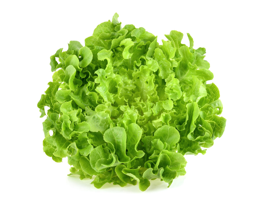 Lettuce, Green Leaf 1EA