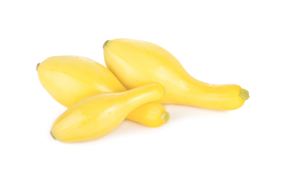 Squash, Yellow 3CT