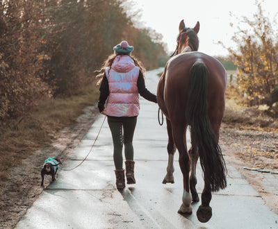 The Confessions of a New Horse Owner