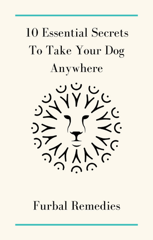 10 essential secrets to take your dog anywhere