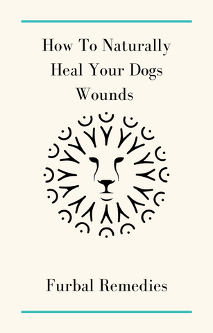how to naturally heal your dogs wounds