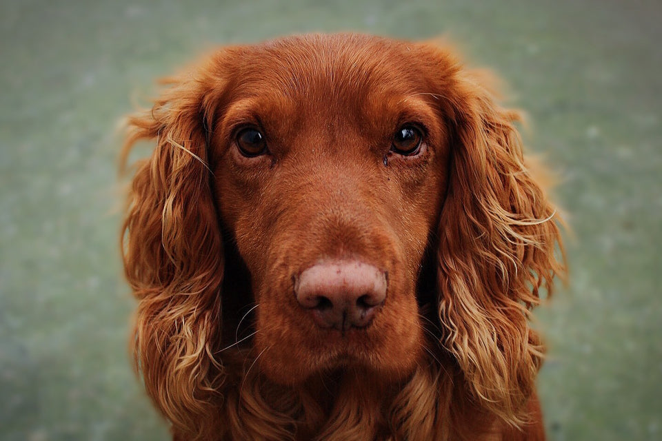 Ask Us A Free Question about your dogs health and find holistic, herbal solutions to your dogs chronic health problems