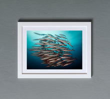 Load image into Gallery viewer, Barracuda Shoal