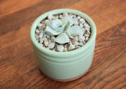 Ceramic Succulent Planter - Seafoam Green