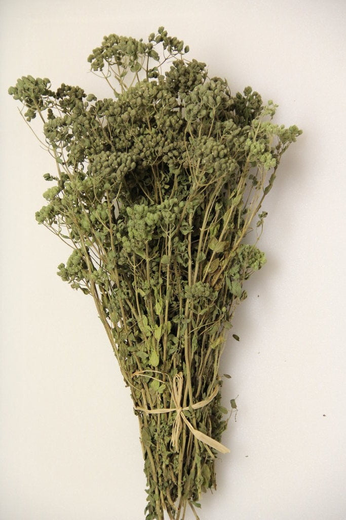 Organic Dried Greek Oregano On The Stem