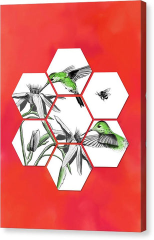 Honeycomb Hummingbird - Canvas Print